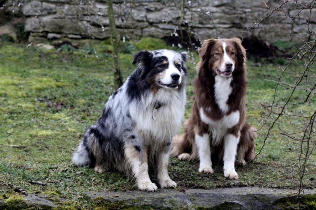Kalle & Amber